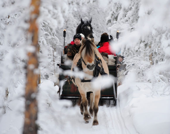 family on Horse-drawn sleigh ride in Trysil