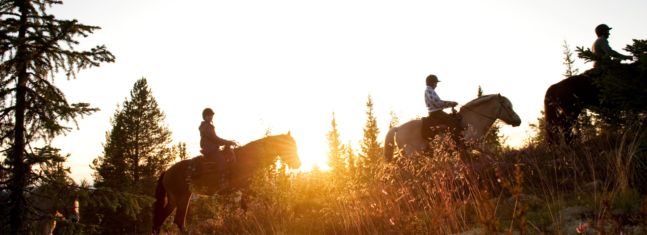People on horseback riding in Trysil in the sunset