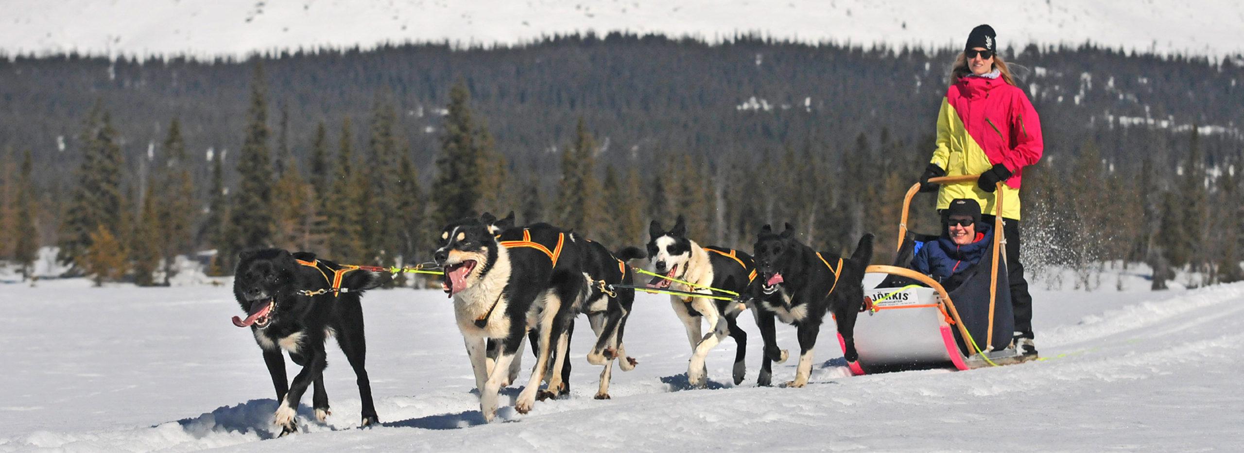 Couple on dog sledding in Trysil