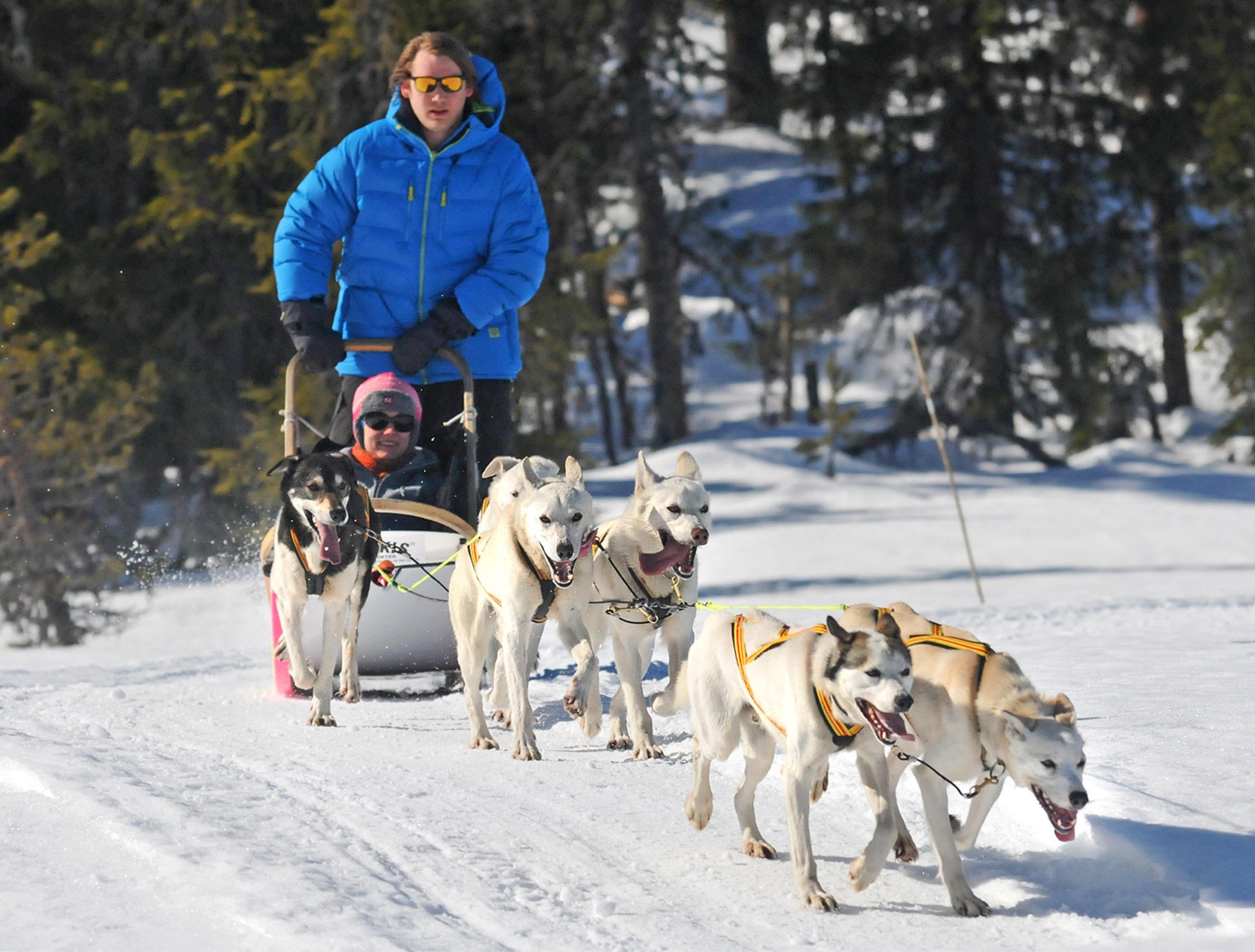 Friends on dog sledding in Trysil