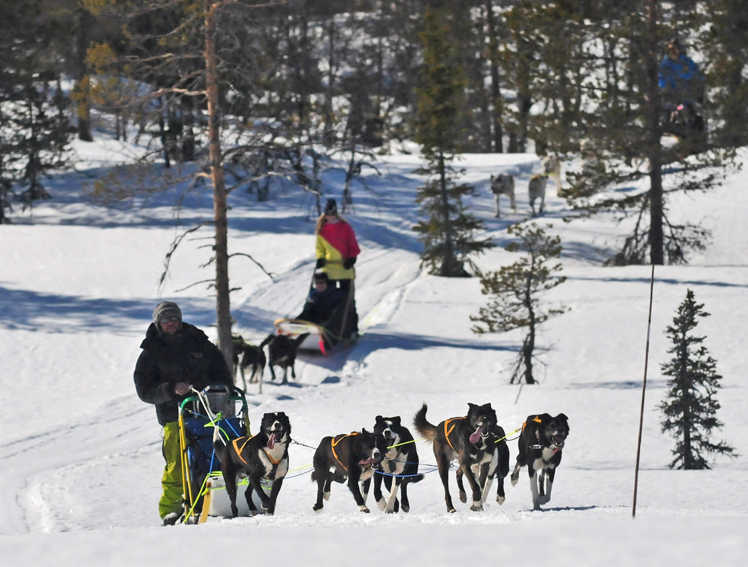 People on dog sledding in Trysil